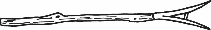 啮齿动物刺杆
