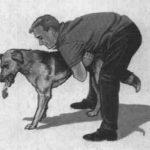 宠物海姆利克急救法