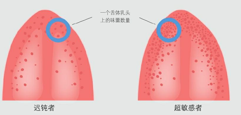 舌体乳头上的味蕾数量