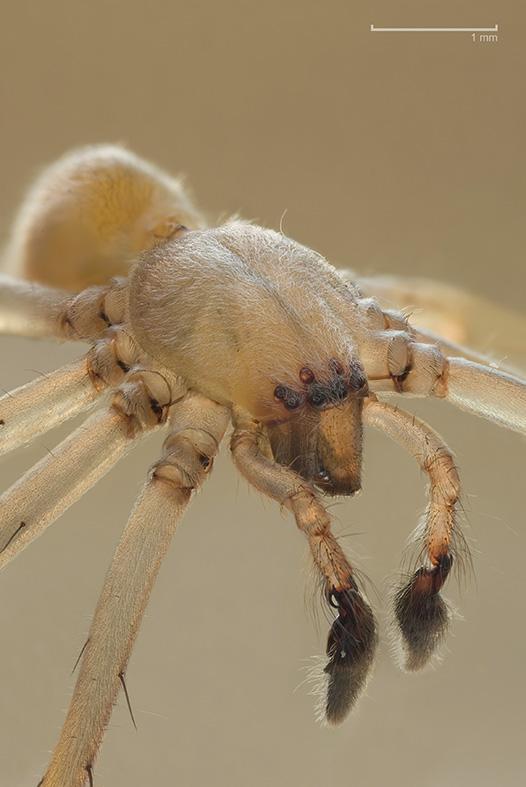 蜘蛛 微距