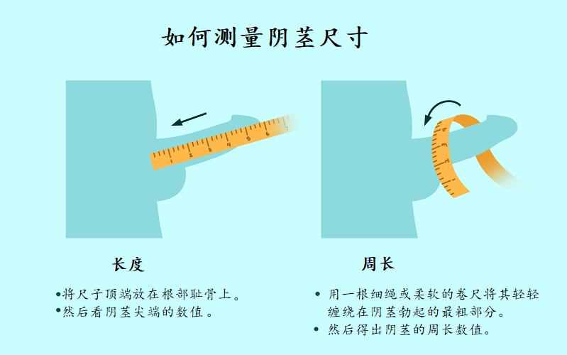 如何测量阴茎尺寸